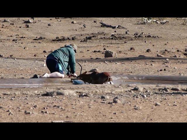 """رجل ينقذ  """"غزالا"""" من الطين العميق"""