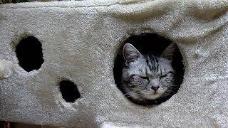 保護猫アメ太君がうちに来るまでのいきさつ Cat Ameta's Story   Kholo.pk