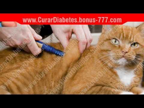 Atender a los pacientes con diabetes