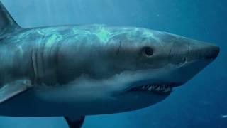 С неба упала акула! Что она там делала?
