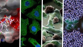 AACR-NCI-EORTC International Conference on Molecular Targets and Cancer Therapeutics: