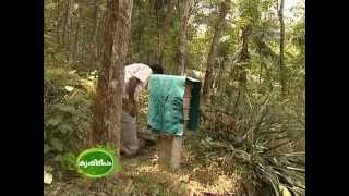 Bee keeping : dwarf honey bees