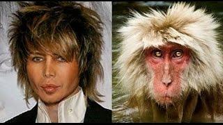 На каких животных похожи знаменитости
