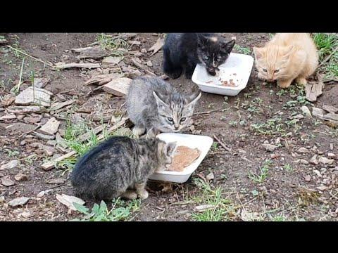 Quello che aiuta da vermi a un gattino