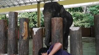 TEMERLOH : Pusat Konservasi Gajah Kebanggsaan Kuala Gandah