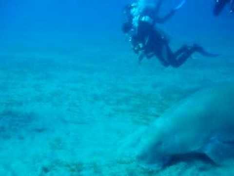Diving Akassia, tauchplatz, Sheik Malik