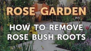 How to Remove Rose Bush Roots