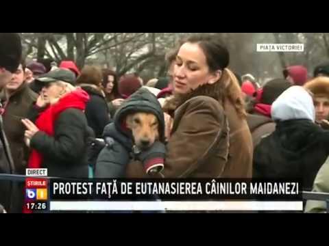 Protest fata de eutanasierea maidanezilor in Capitala/martie 2014