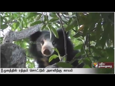 Officials-attempt-chase-away-bear-into-forest-in-Nellai-Special-report