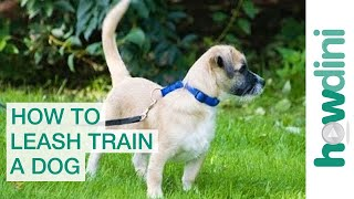 Leash Training a Puppy: How to Leash Train a Puppy...