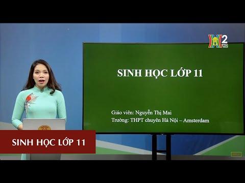 MÔN SINH HỌC - LỚP 11 | CHỦ ĐỀ: SINH SẢN Ở ĐỘNG VẬT - TIẾT 2 | 15H45 NGÀY 02.05.2020 | HANOITV
