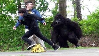 Classic Gorilla In Real Life Hidden Camera Prank