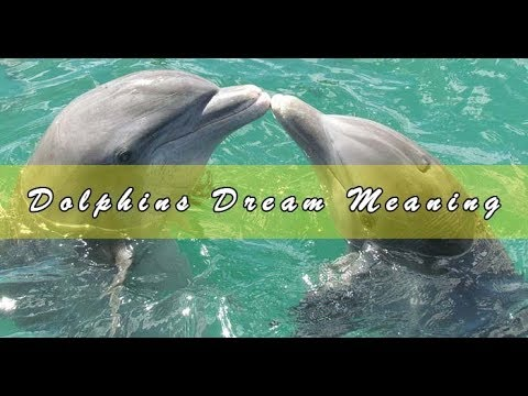 Dreams about dolphins - Interpretation and Meaning