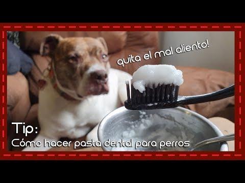 Tip: Cómo hacer pasta dental para perros y quitar el mal aliento