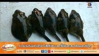 เรื่องเล่าเช้านี้ ชาวบ้านกินปลาปักเป้า เสียชีวิต 2 สธ.ชี้มีพิษสะสม เตือนงดบริโภค (24 ก.พ.58)