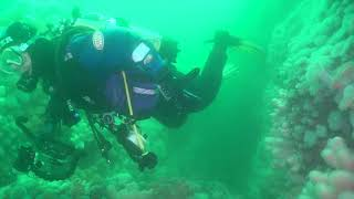 Above and below footage of our 2018 trips to St Abbs and Eyemouth