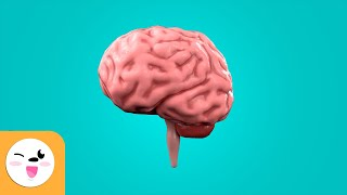 The Brain for Kids - What is the brain and how does it work?