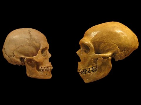 Homo Sapiens vs Neanderthals | The Evolution of Language