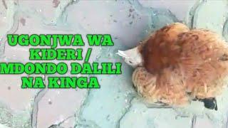 Ufugaji Wa Kuku: Ugonjwa Wa Kideri / Mdondo Dalili Na Kinga