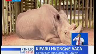Kifaru pekee wa kiume aina ya northern white rhino aliyekuwa amesalia hai duniani amekufa