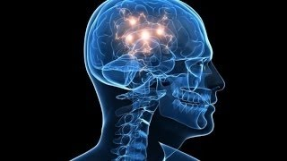 What is reality the human brain