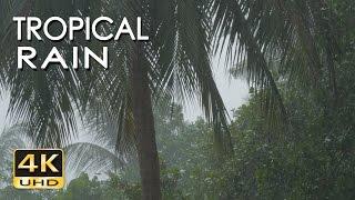 Смотреть онлайн Эффект присутствия: звуки тропического дождя
