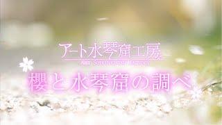 桜と水琴窟の調べ
