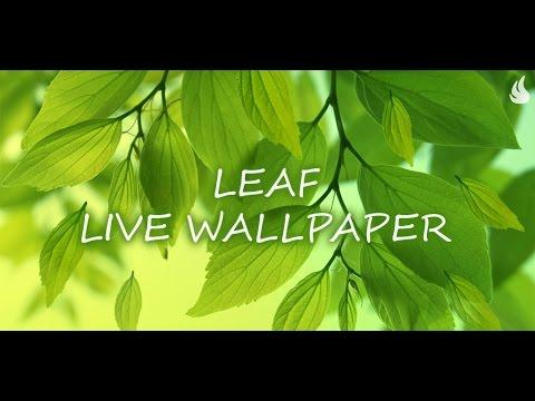 Video of Leaf Live Wallpaper