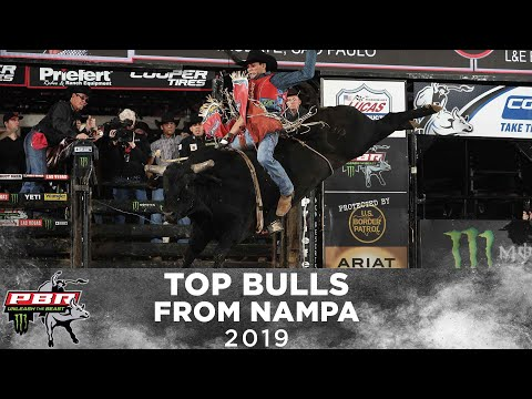 The HIGHEST Marked Bulls of Nampa | 2019