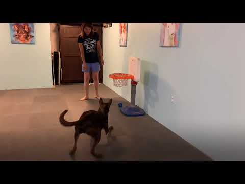 Tricks are a lot of fun for you and your dog!