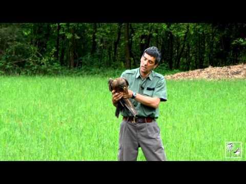 La liberazione di un rapace nel Parco Pineta