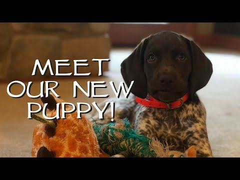 Introduce Your New Puppy To Your House - Upland Bird Dog Training