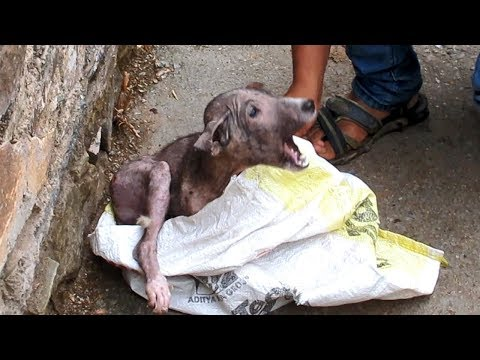 Puppy's transformation after rescue