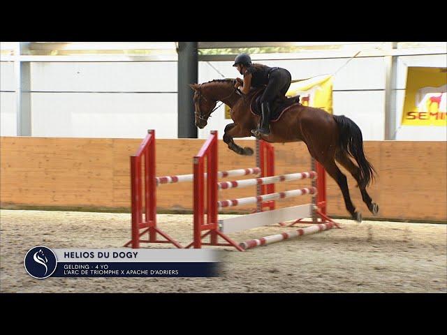 HELIOS DU DOGY