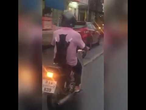 Anteprima Video Un gatto a passeggio sul motorino, troppo da ridere!!!