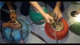 Soi Ếch Đầu Mùa Trúng Ngay Khu Vực Toàn Ếch Đực, và Con Chuột Cống Nhum To