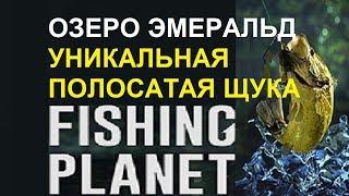 Fishing planet как ловить уникальную полосатую щуку