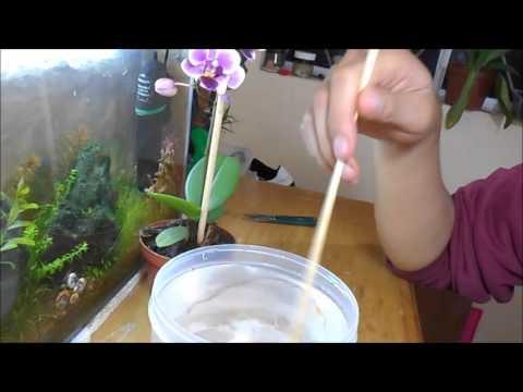 Cómo hacer un revigorizante para orquídeas || Orquiplanet