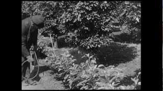 preview picture of video 'Obstbau in Geisenheim (1932)'