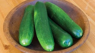 Learn all about growing Cucumbers