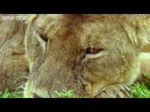 Talking wild animals 2