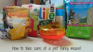 How to care for a pet fancy mouse! | Mouse Care