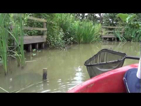 Electrofishing / Electro Fishing my Pond – Part 2