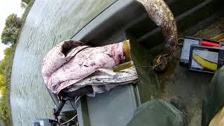 Рыбалка володарском районе астраханской области