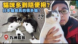 【貓咪多到隨便抱?九洲藍島真的很多貓?】狸貓