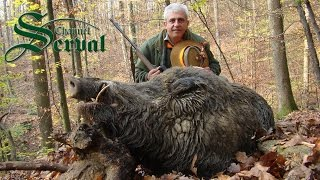 Hunting Giant Wild Boars   TOP 10 Shots
