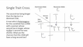 Punnett Square Example - One Trait Cross
