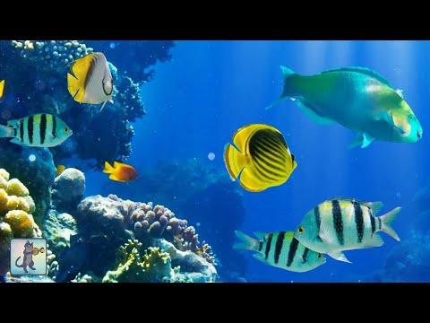 2 Hours of Beautiful Coral Reef Fish Relaxing Ocean Fish & Stunning Aquarium Relax Music 1080p HD