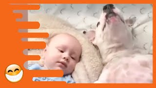 Naughty Dogs and Babies are the Best Friends - Best Baby Videos