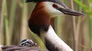 Birds of Russia 2